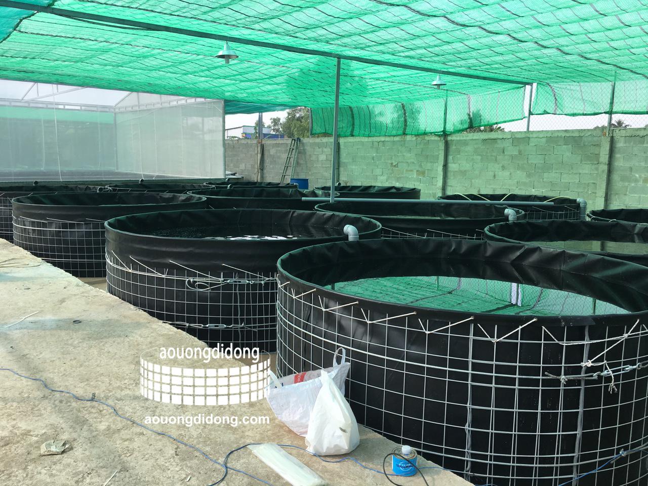 Kỹ thuật nuôi lươn không bùn