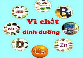 Tọa đàm vi chất dinh dưỡng vì sức khỏe và tầm vóc người Việt